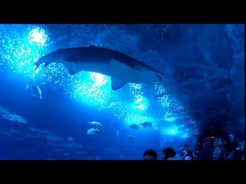 Acuario gigante tunel tiburones oceanografic v01 valencia for Acuario valencia precio