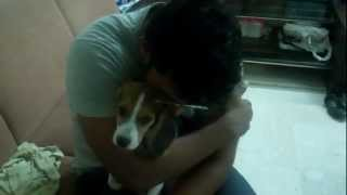 Beagle Puppy And Husband Having A Quiet Moment