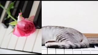 [ピアノ] 世界が終るまでは・・・/WANDS (歌詞:字幕SUB対応/カラオケ)
