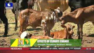 Network Africa: Drought Threatens Southern Africa 11/11/15 Pt 2