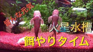【アクアリウム】トゲウナギ君はゆっくりお食事 #tank #aquarium #アクアリウム  音楽 甘茶の音楽工房