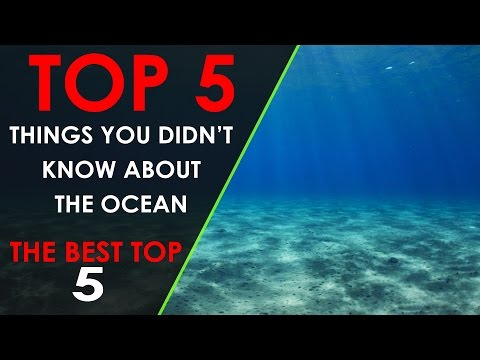 [TOP 5] Things You Didn't Know About The Ocean