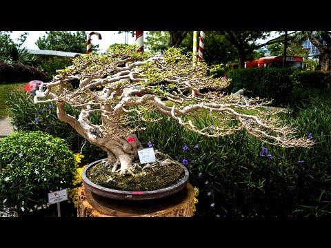 Toàn bộ triển lãm cây cảnh Hải Phòng 2017