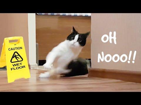 SLIPPING CAT ON WET FLOOR