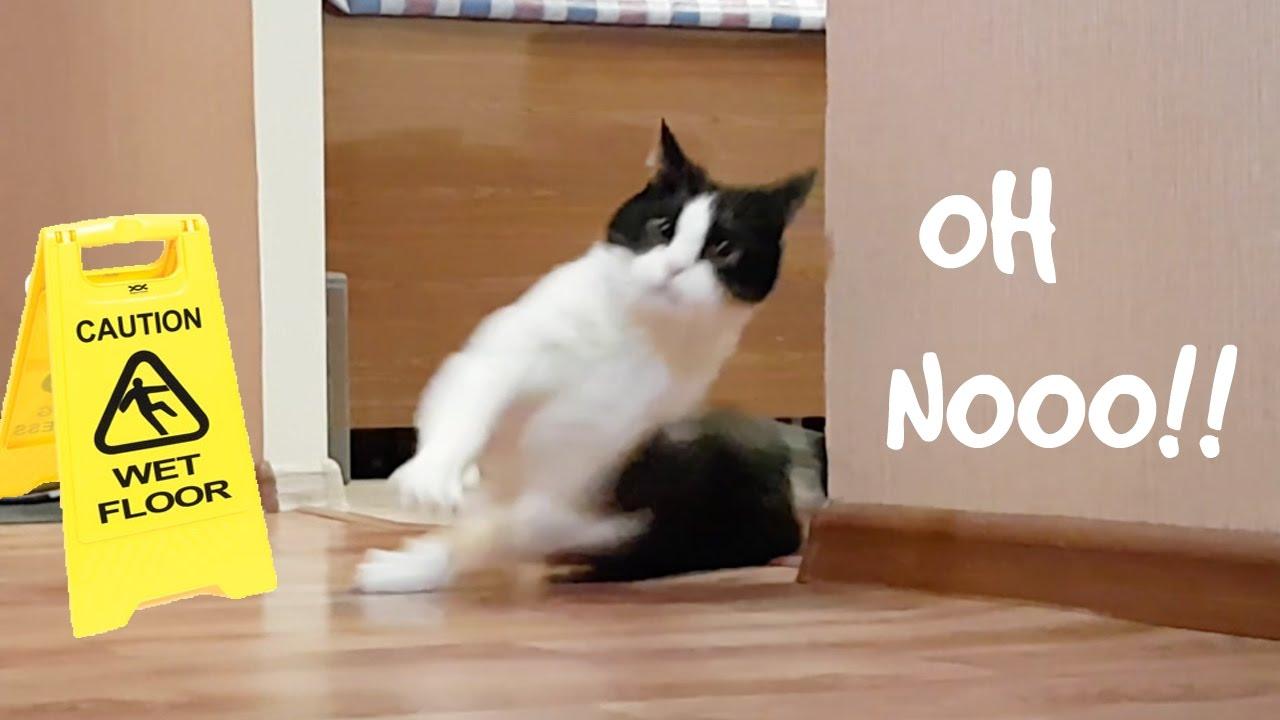 Cleaning Cat Meme