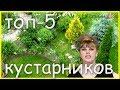 ТОП 5 красивых цветущих КУСТАРНИКА для САДА и ДАЧИ mp3