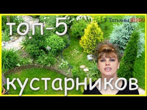 ТОП-5 красивых, цветущих КУСТАРНИКА для САДА и ДАЧИ!!!