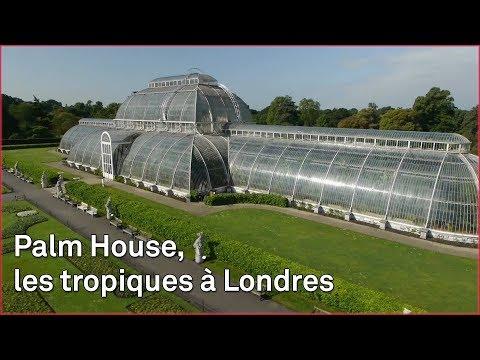 Les jardins de Kew abritent les plantes du monde entier
