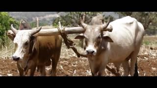 Ethiopia  Abbush Zallaqaa   Fullaanneey NEW Oromo Music Video 2016