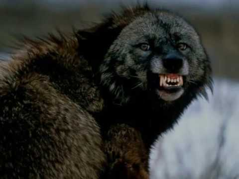 Necromantia - Unchaining The Wolf