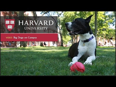 Harvard report: Dogs reduce stress