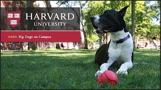 Harvard report: Dogs reduce stress