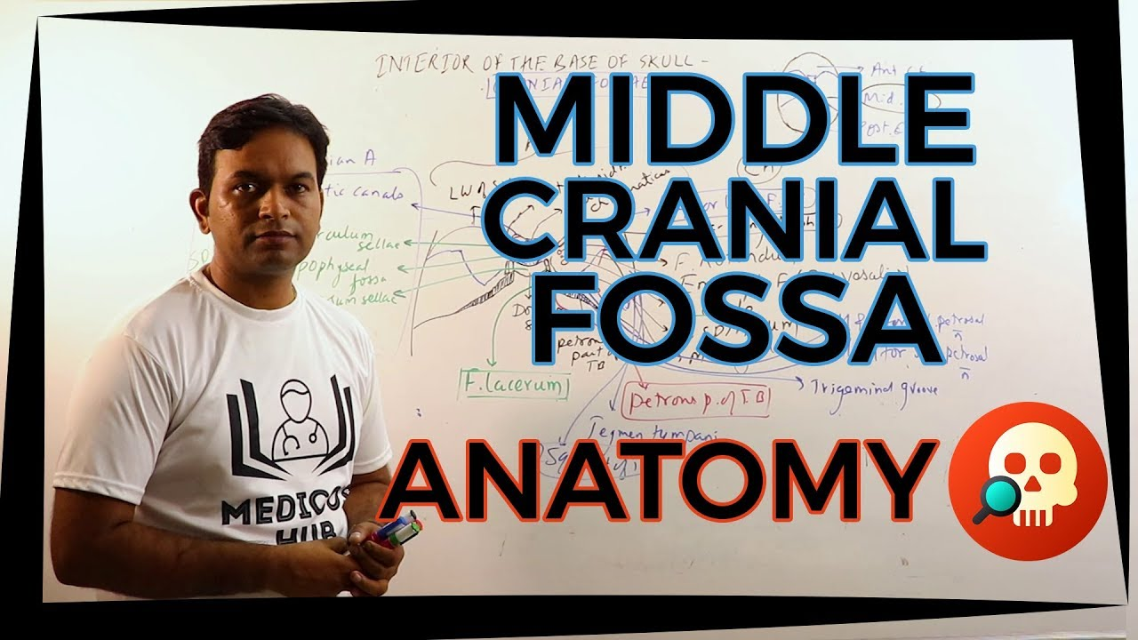Anab010 Middle Cranial Fossa Anatomy Dr Prashant Sharma