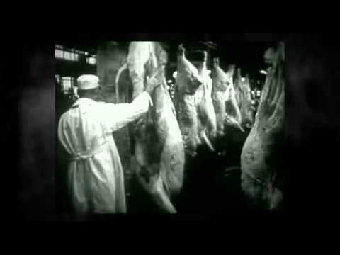 The horror of meat packing industries.