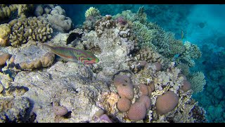 Egypt Sharm El Sheikh Panorama Naama Heights Верблюды квадрациклы Ras Mohammed подводный мир