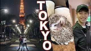 TOKYO: PHOTO SHOOTS + HEDGEHOGS! - ShibSibs
