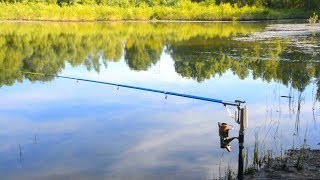 ЖОР ОГРОМНОГО КАРАСЯ на САМОПОДСЕКАЮЩУЮ УДОЧКУ! Рыбалка на карася 2020