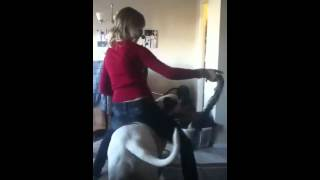 Girl fighting big old english bull dog