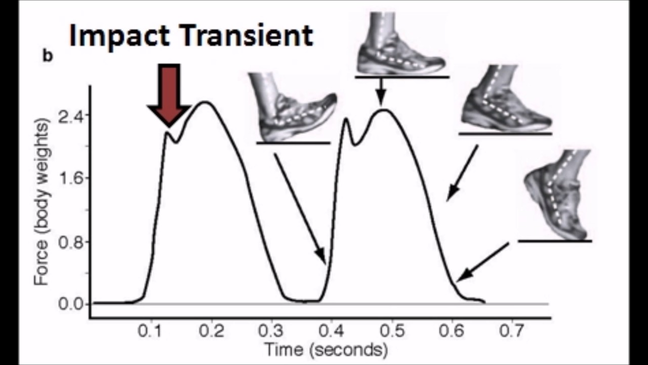 Heel To Toe When Running >> Forefoot Running Vs Heel Toe Defining Impact Transient In Heel