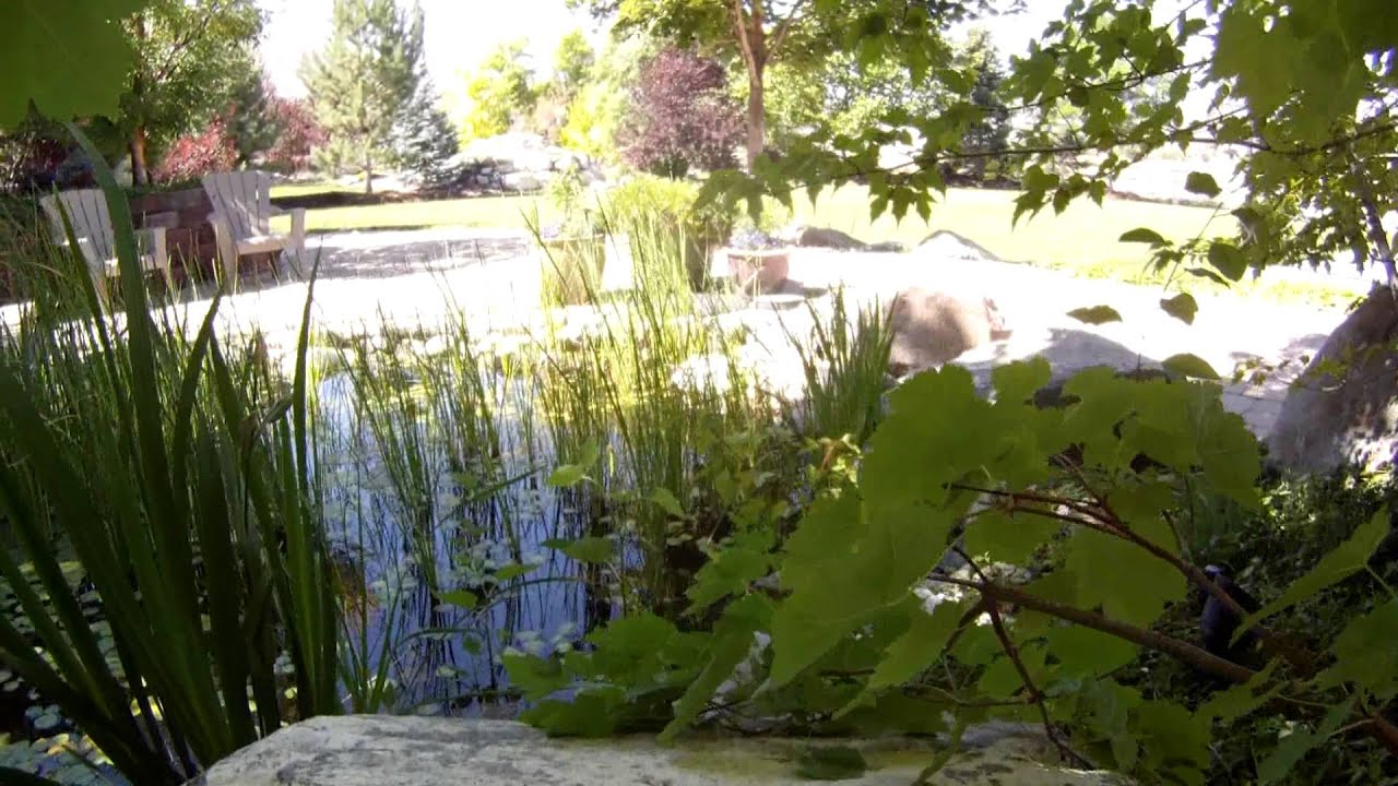 Backyard Pond Koi Honey Bees Aquatic Plants