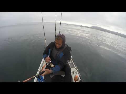 Lajolla Kayak Fishing  Yellowtail