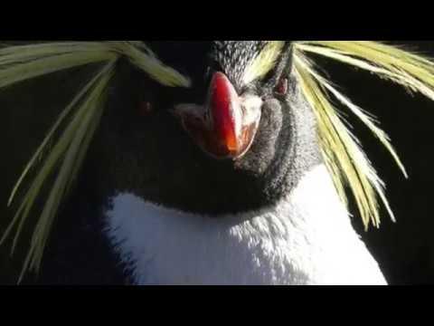 Evon's Antarctica Project