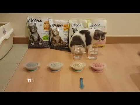 ทรายแมวเต้าหู้มาลี 🆚 ทรายแมวภูเขาไฟ 🆚 ทรายเบนโทไนท์ | Malee & Friends