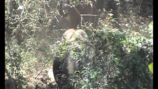 Elephants sand bath at Parambikulam wildlife sanctuary
