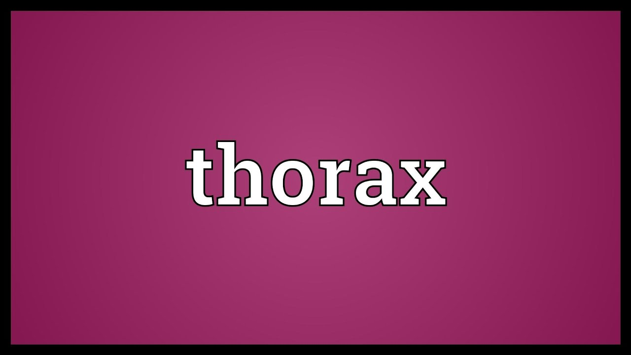 Thorax Meaning Youtube