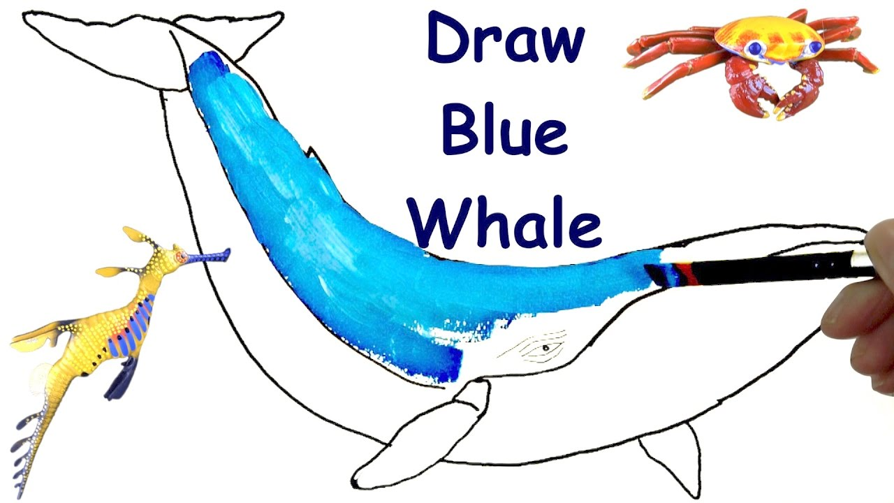 how to draw blue whale draw animals coloring pages kids