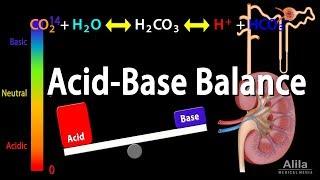 Säure-Base-Gleichgewicht, Animation.