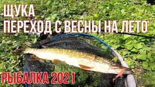 Щука на спиннинг переход с весны на лето Рыбалка 2021