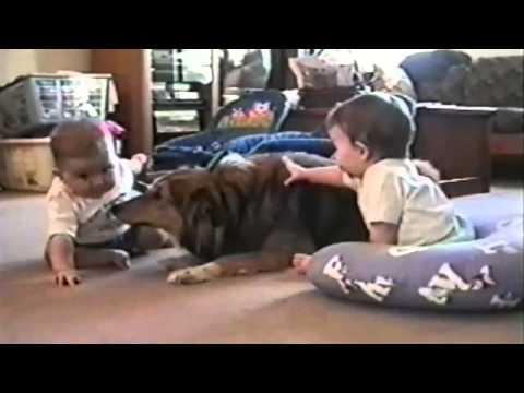 Подборка смешных видео с детьми и животными