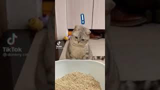 cute! cat! funny cat smart cat