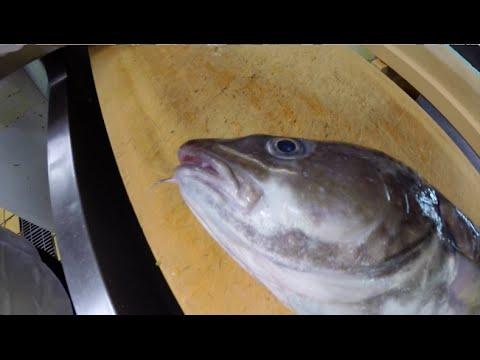 [青森]鱈の白子の天ぷらを食べる [モンちゃん]