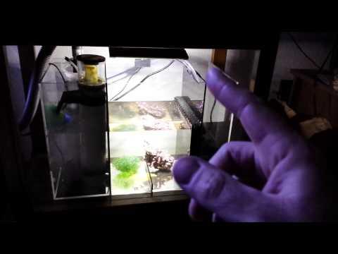 40 gallon saltwater reef aquarium added the eshopps 100 refugium