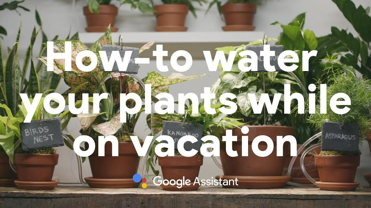 How to water your plants while on vacation with the Google Assistant