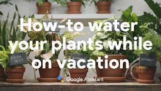 How-to water your plants while on vacation with the Google Assistant