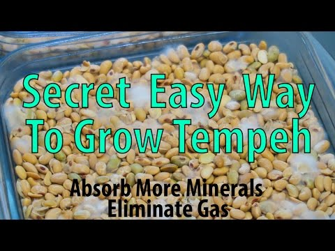 The Secret Quick & Easy Way To Grow Tempeh.