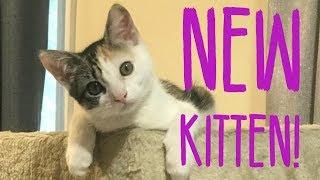 RESCUING A NEW KITTEN!