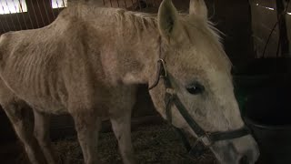 133 Horses Rescued in Maryland