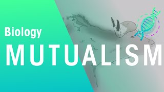 Ecology: What Is Mutualism | Biology for All | FuseSchool