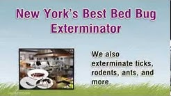 New York's Best Bed Bug Exterminator - Westchester