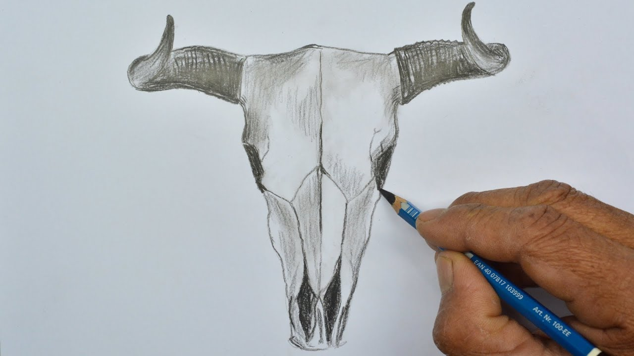 How To Draw A Bull Skull