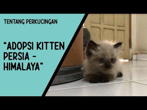 CARA MEMANDIKAN KUCING YANG BENAR BERSAMA drh Siti Gusti Ningrum (drh Praktisi Klinik Starvet Bogor).