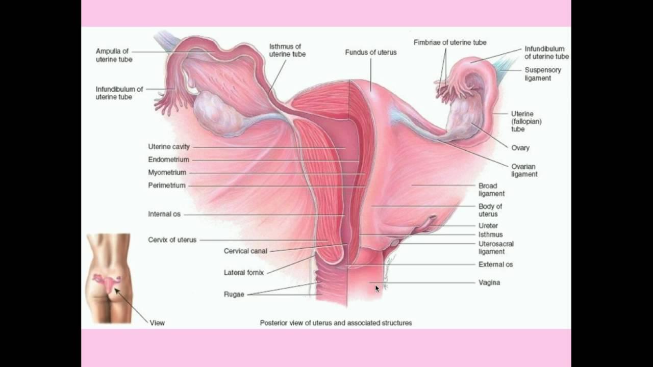 Cervical Cancer - CRASH! Medical Review Series - YouTube