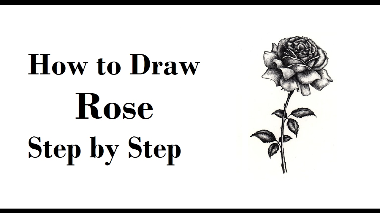 How to Draw a Rose pencil drawing step by step - YouTube