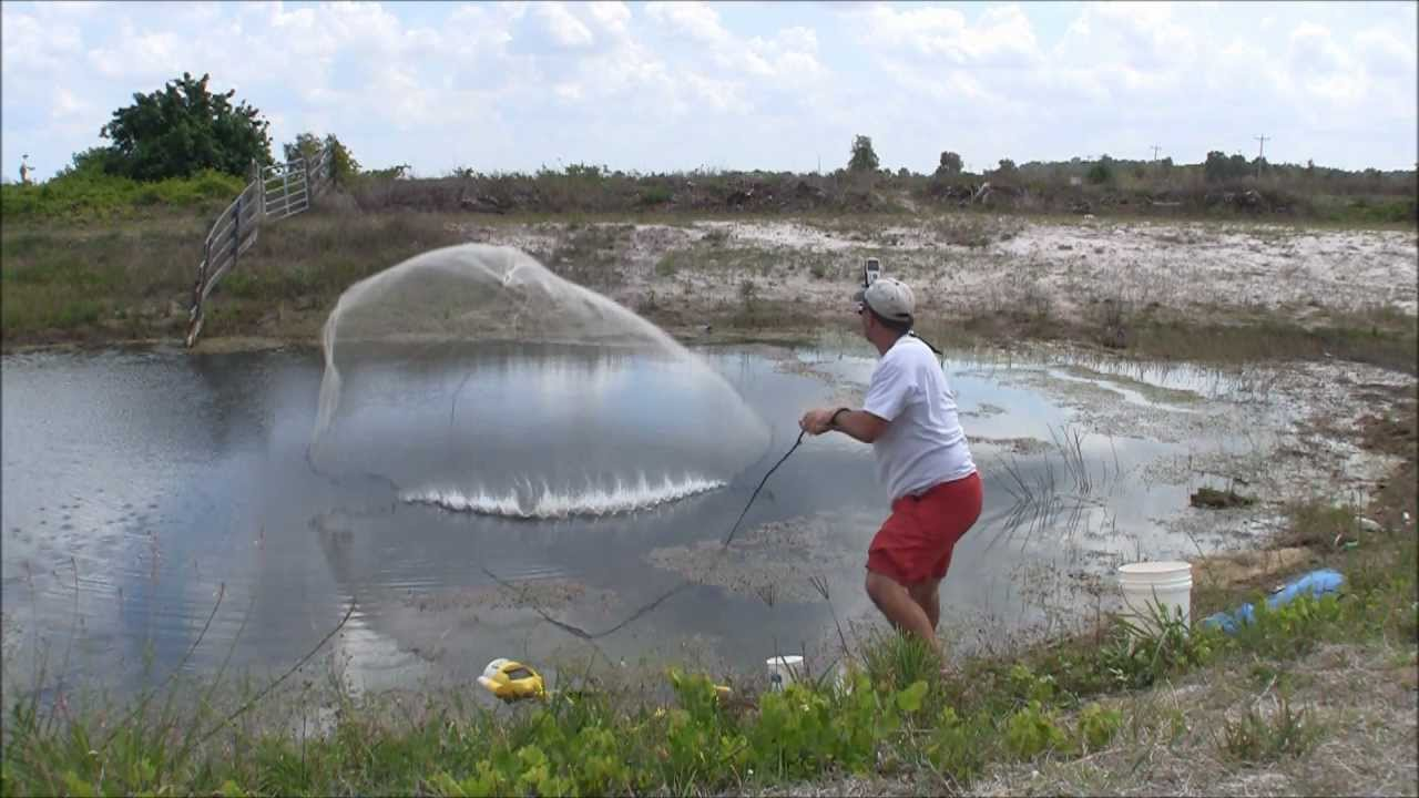 Golden shiner gold mine throwing a big cast net for live for Big fishing net