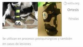 Férulas inmovilizadoras caninas
