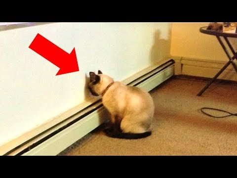 Nick Wize - If Your Pet Is Pushing Its Head Against A Wall, Get Them To A Vet